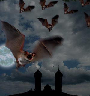 Fledermäuse in der Nacht