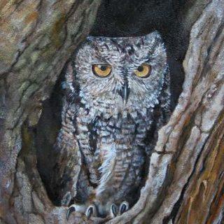 Tiere: Eule im Baum