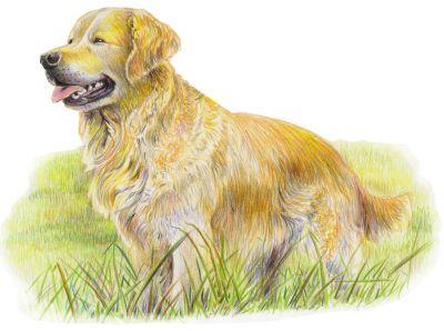 Hund Aquarell