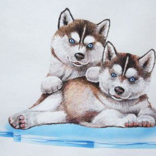 Illustration Huskiwelpen