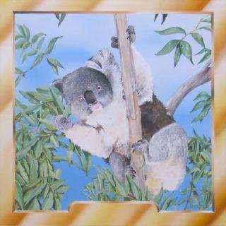Koalabär für eine Karte