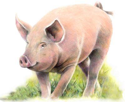 Schwein Buntsift