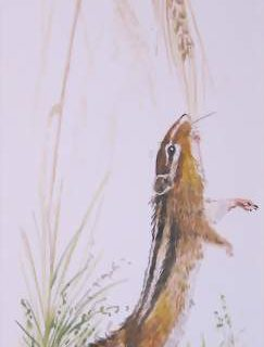 Streifenhörnchen Aquarell