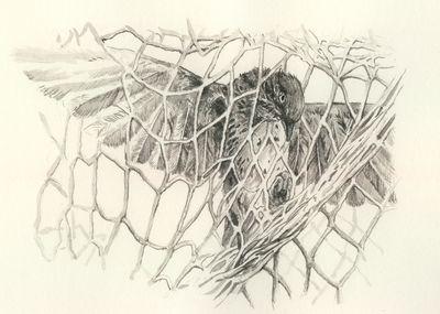 Singvogel Aquarell