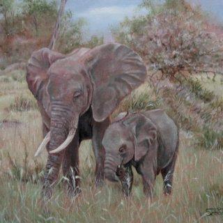 Elefantenkuh mit Junges
