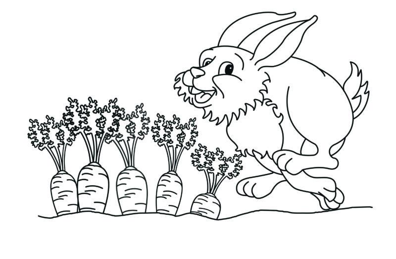 Strichzeichnung Hase