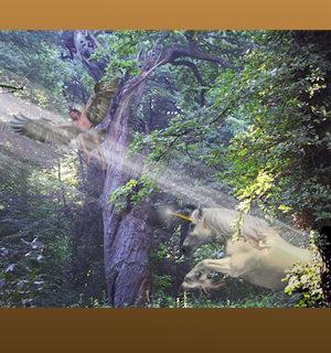 Waldvogel und Einhorn